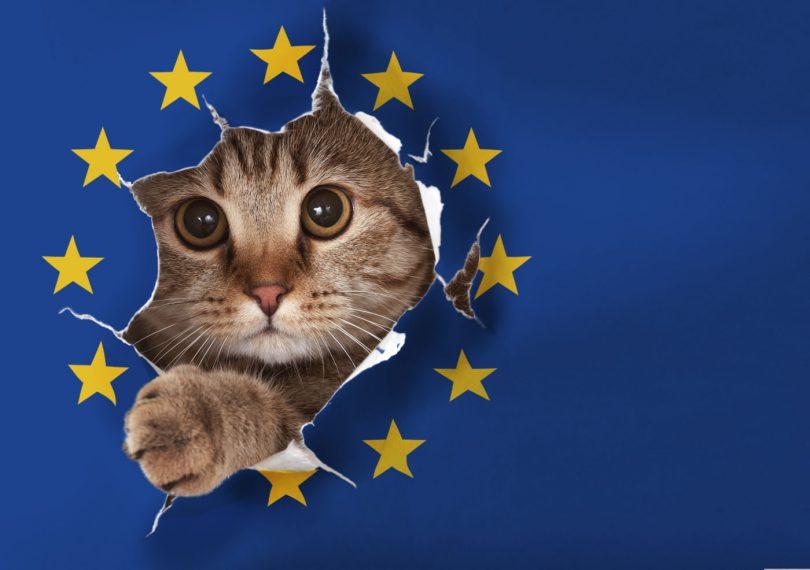 brexit pussy cat